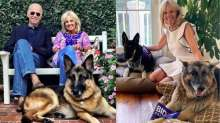 Joe and Jill Biden have two German Shepherds- Major and Champ