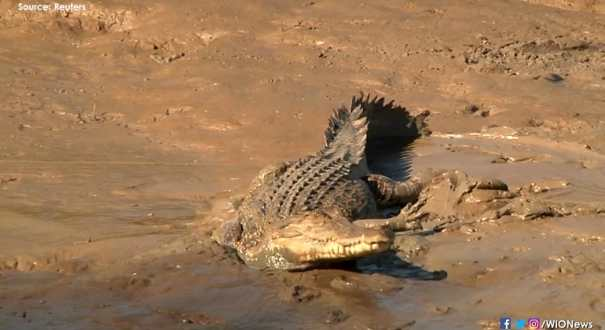 Australia's Northern Territory debates letting tourists hunt crocodiles
